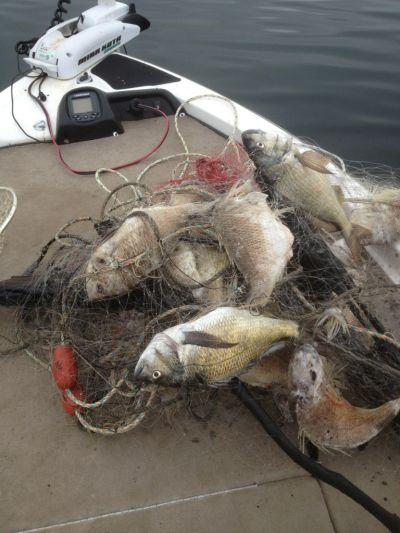 bream-in-net