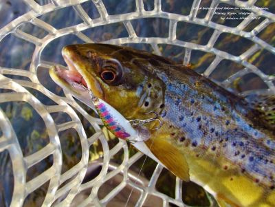 2015-10-19-Rapala-catches-another-nice-Mersey-brown-trout