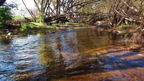 2018 04 07 Back water that gave up a brown trout MerseyRiver