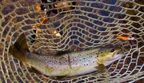 2018 01 18 Meander River wild brown