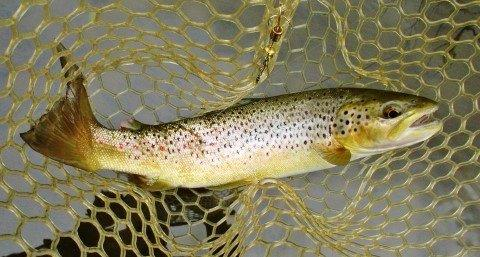 2018 10 15 5 Best trout of the day