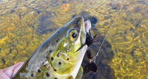 2019 03 22 Mepps stone fly bug spinner catches another trout